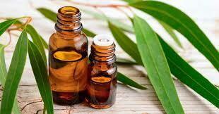 Eucalyptus Essential Oil Gallon