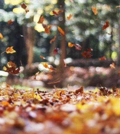 Falling Leaves Fragrance