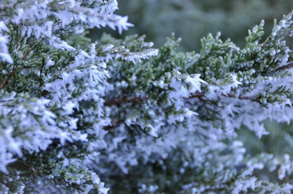 Frosted Juniper Fragrance