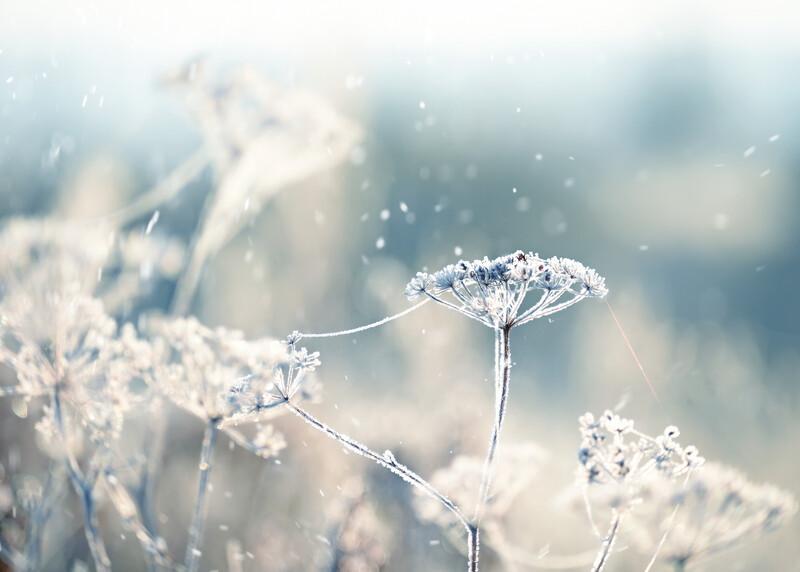 Sparkling Snowflakes Fragrance Oil