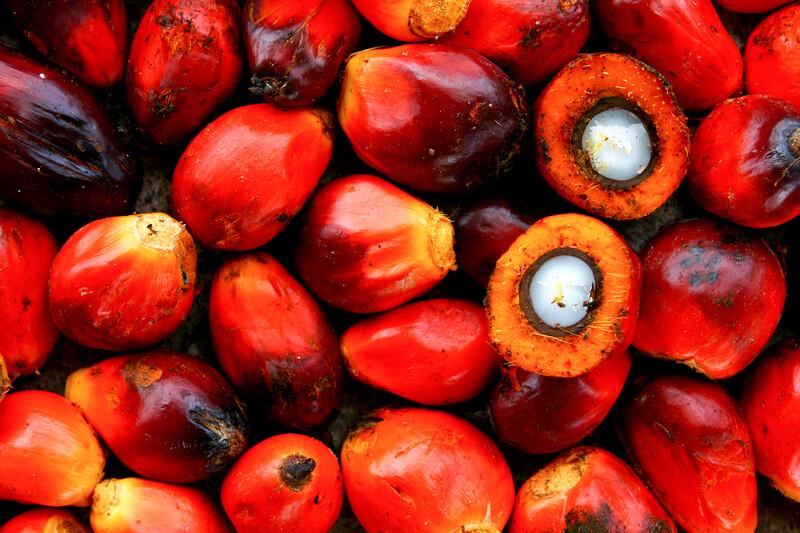 RBD Palm Oil (No-Stir, Homogenized)