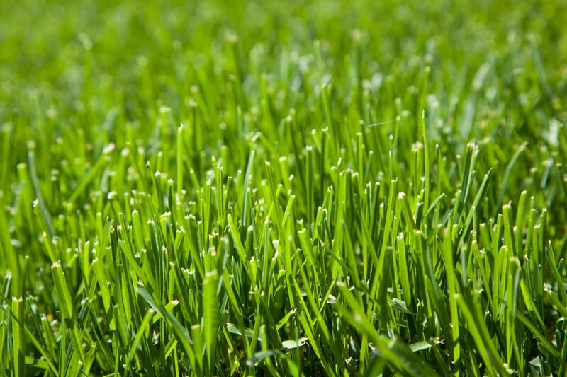 Fresh Cut Grass Yankee Type Fragrance