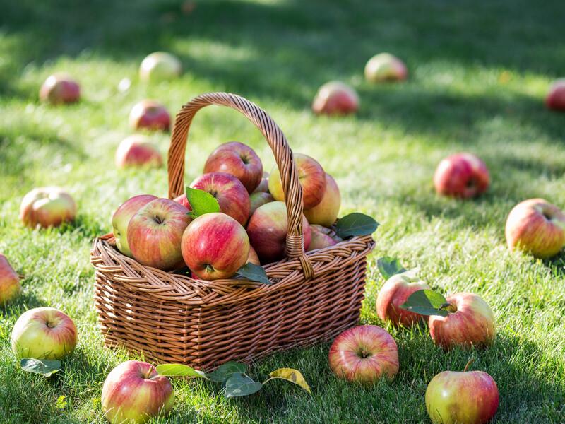 Apple Harvest CS TYPE Fragrance