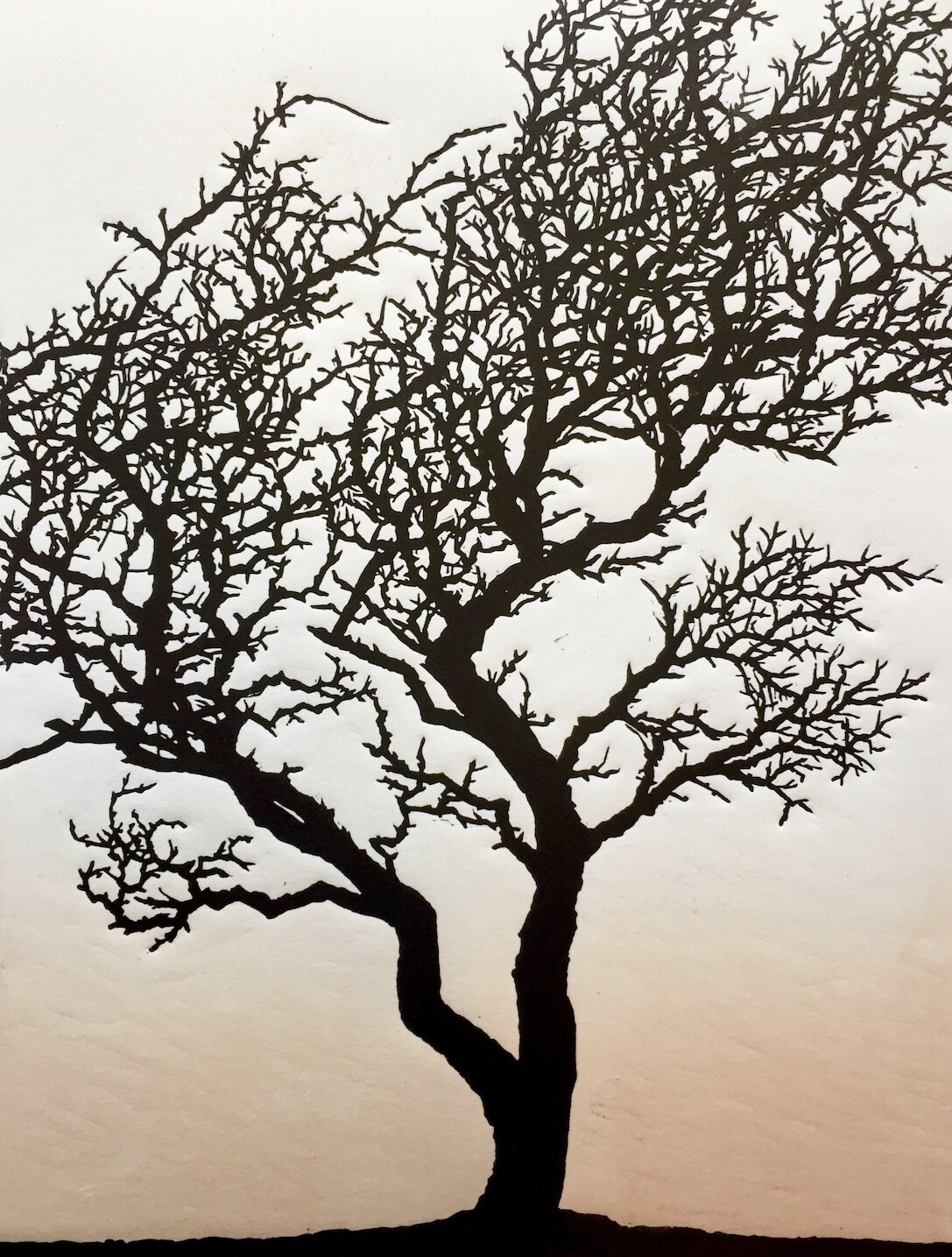 Hawthorn 2, by Richard Shimell