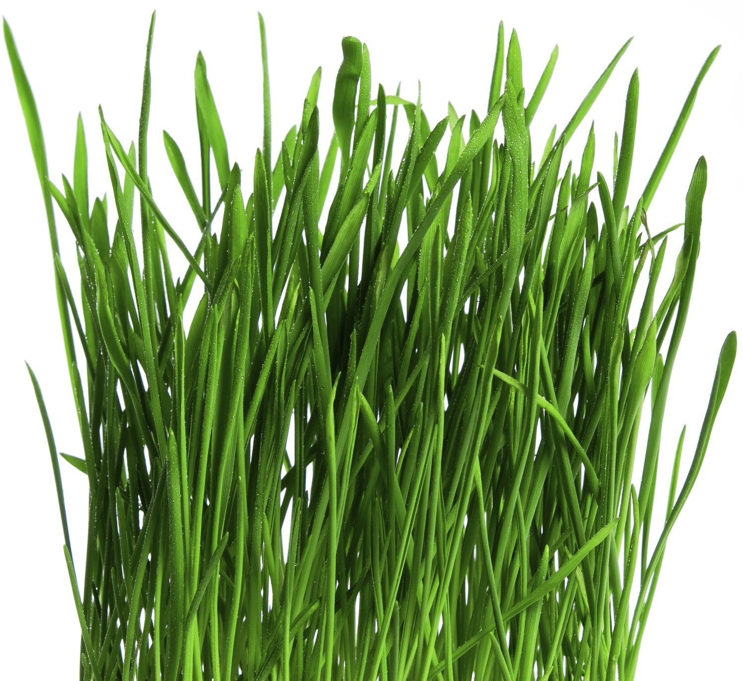 """Substrate Bag """"Grass"""""""