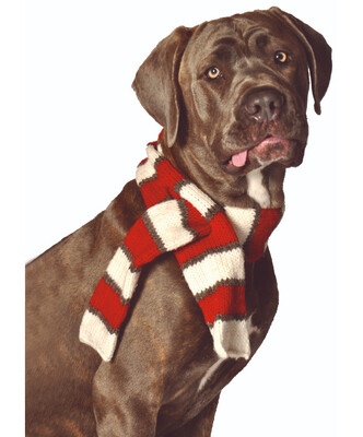 Chilly Dog White and Red Dog Scarf | L