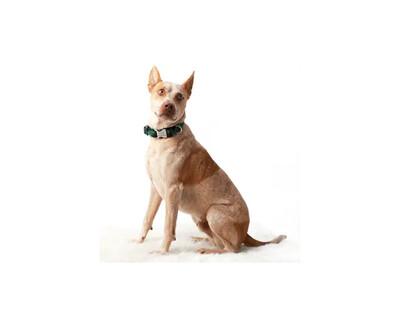 Mimi Green Buffalo Plaid Dog Collar Green/Black | M
