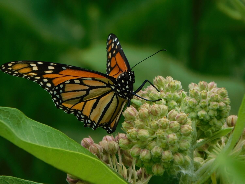 Reclaimed Boardwalk Prairie Butterfly Bed Build