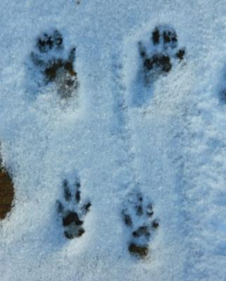 Eco-Explorers - Wild in the Winter - K-4th grade (February 9-11) 1-3PM