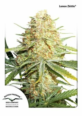 Dutch Passion - Lemon Zkittle (fem.) 05614