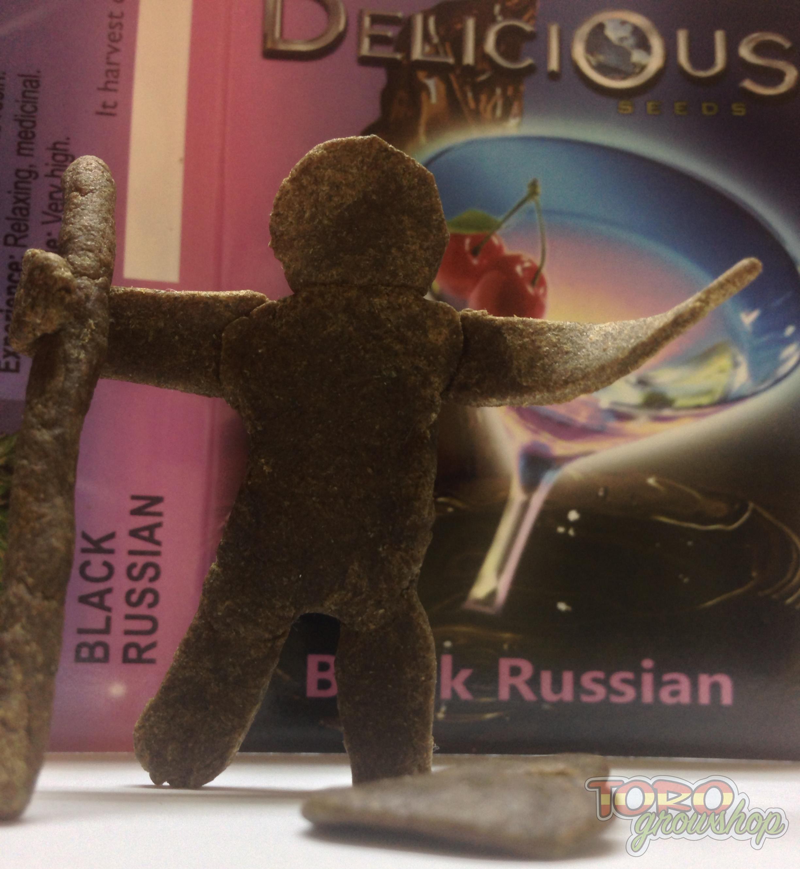 Delicious Seeds - Black Russian (fem.)