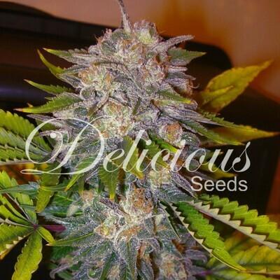 Delicious Seeds - Caramelo (fem.) 02608