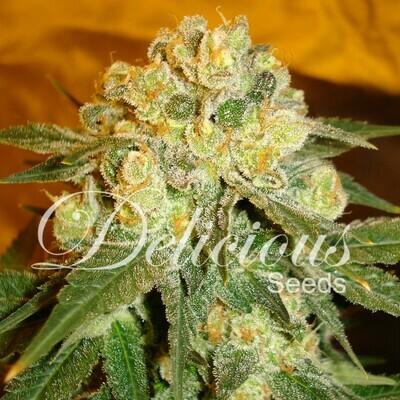 Delicious Seeds - Marmalate (fem.) 02586