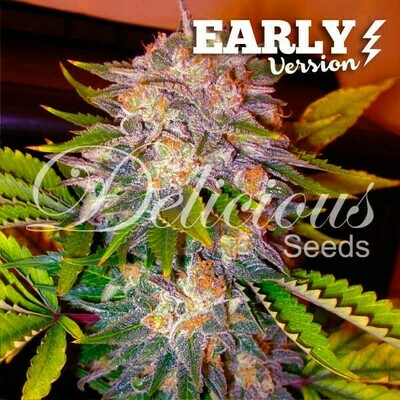 Delicious Seeds - Caramelo Early Version (fem.) 02327