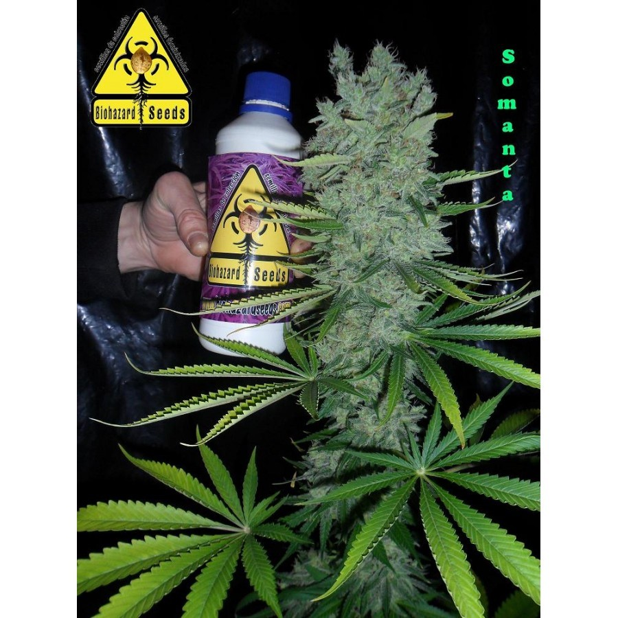 Biohazard Seeds - Somanta (fem.)