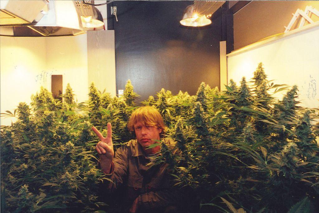 Феминизированные семена марихуаны K.С. Brains Seeds - Cristal Paradise