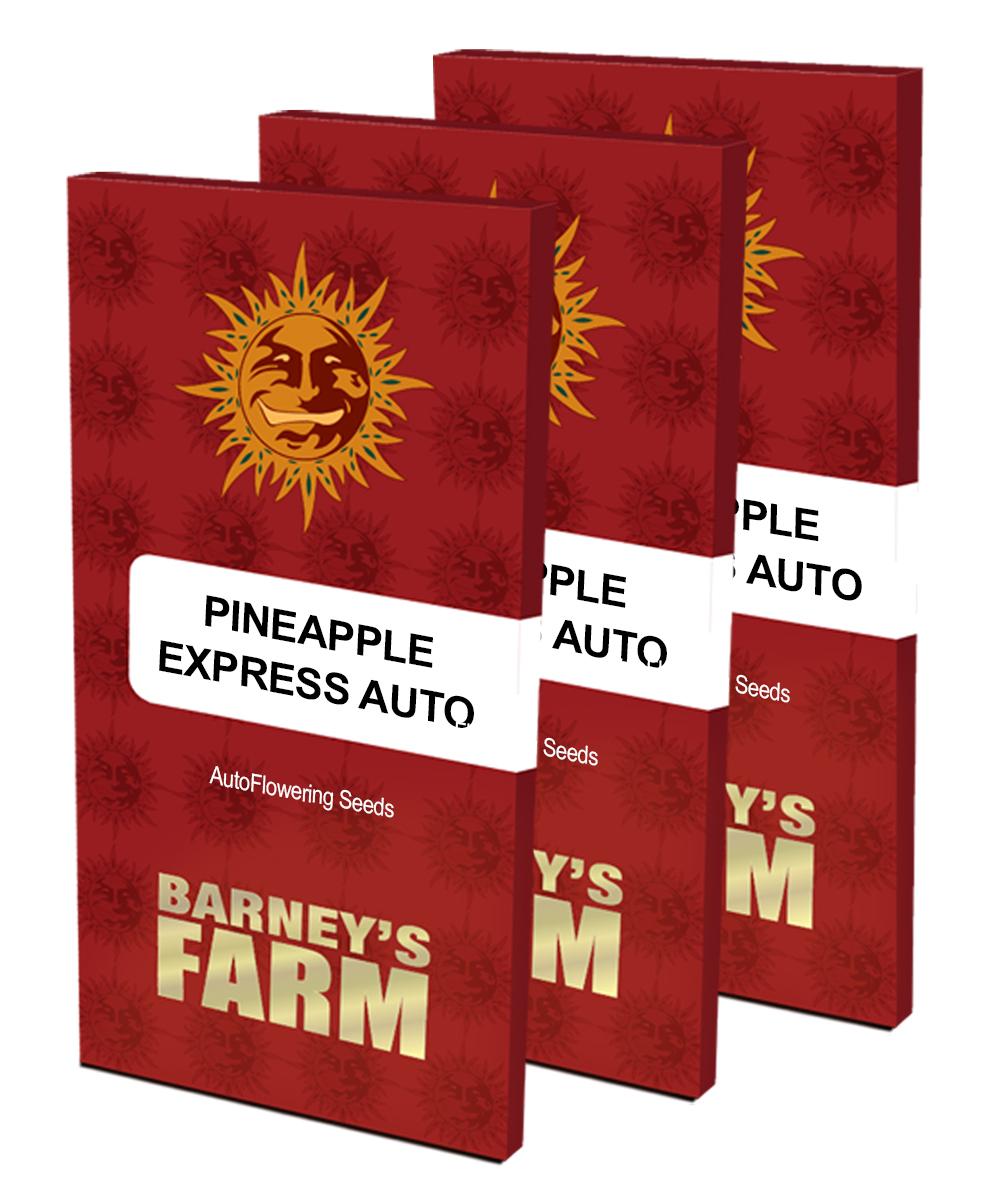 Barney's Farm - Pineapple Express Auto (auto/fem.)