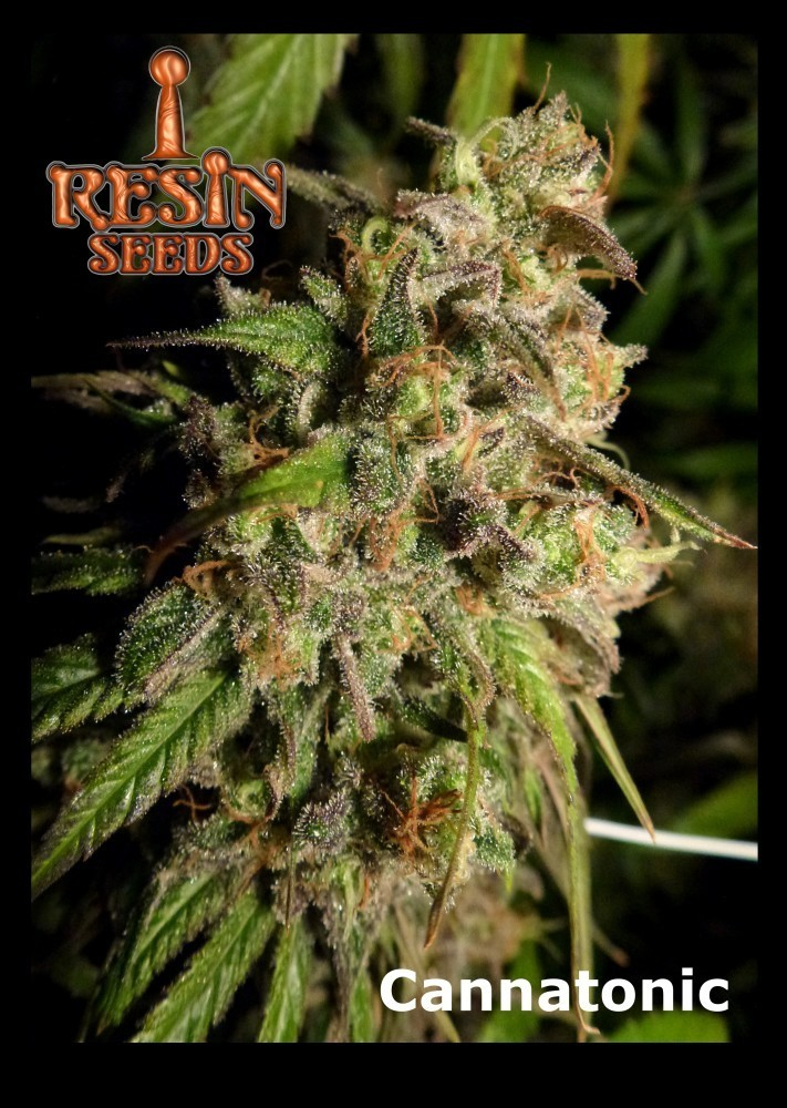 Resin Seeds - Cannatonic (reg.)