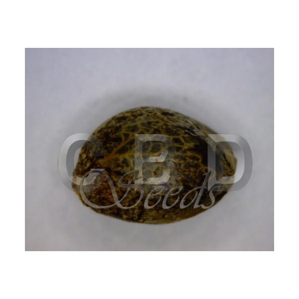 CBD Seeds - Cheese (fem.)