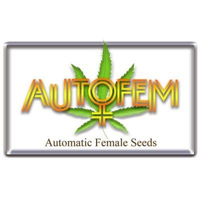 Autofem Seeds - FemMix Colección 01623