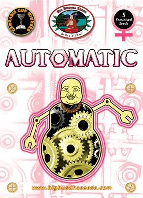 Big Buddha Seeds - Automatic (auto/fem.) 01645