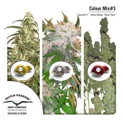 Семена конопли Dutch Passion - Colour Mix 3 01459