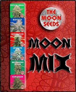 The Moon Seeds - Moon Collection 1 (fem.) moon8