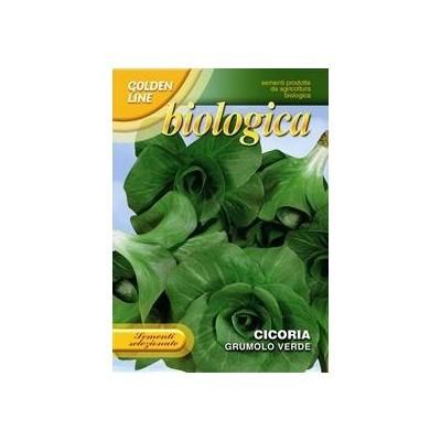 Семена цикория зелёного bi3