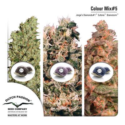 Семена конопли Dutch Passion - Colour Mix 5 01457
