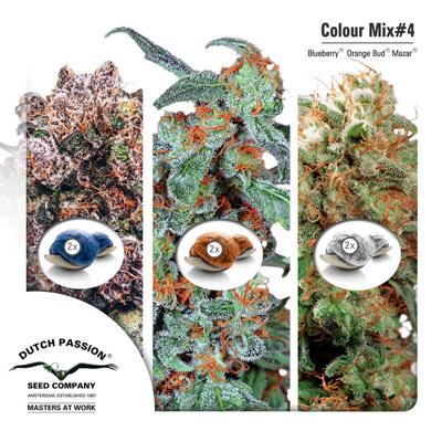 Семена конопли Dutch Passion - Colour Mix 4 01458