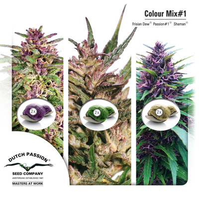 Семена конопли Dutch Passion - Colour Mix 1 01467