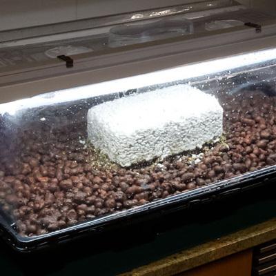 Комплект для выращивания грибов в домашних условиях 02195
