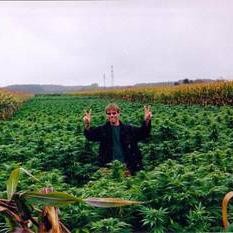 Феминизированные автоцветущие семена марихуаны K.С. Brains Seeds - K.C. 48 01708
