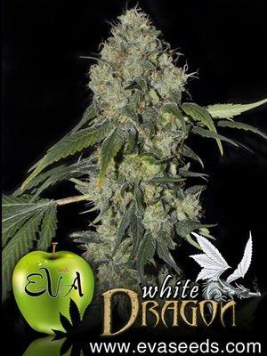 Eva Seeds - White Dragon (fem.) 02625