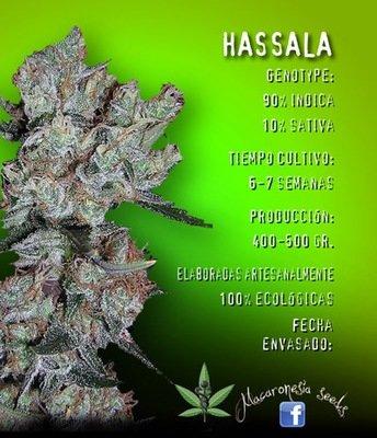 Macaronesia Seeds - Hassala (fem.) 05062