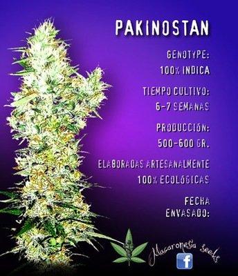 Macaronesia Seeds - Pakinostan (fem.) 05061