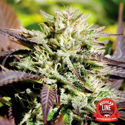 Delicious Seeds - Caramelo (reg.) 03634