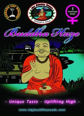 Big Buddha Seeds - Buddha Haze (fem.) 01650