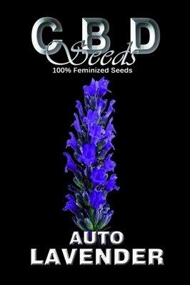 CBD Seeds - Auto Lavender (auto/fem.) 02663