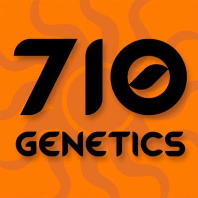 710 Genetics - Old White Widow (fem.) 01059