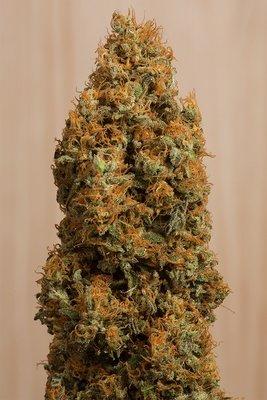 Humboldt Seed Organization - Green Crack CBD (fem.) 04911
