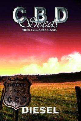CBD Seeds - Diesel (fem.) 04689