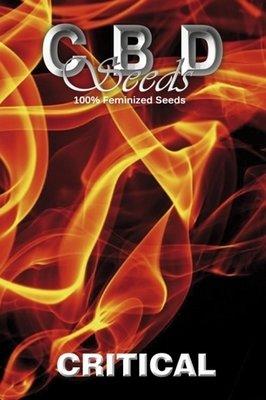 CBD Seeds - Critical (fem.) 04686