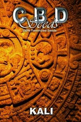 CBD Seeds - Kali (fem.) 04690