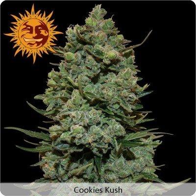 Barney's Farm - Cookies Kush (fem.) 02001