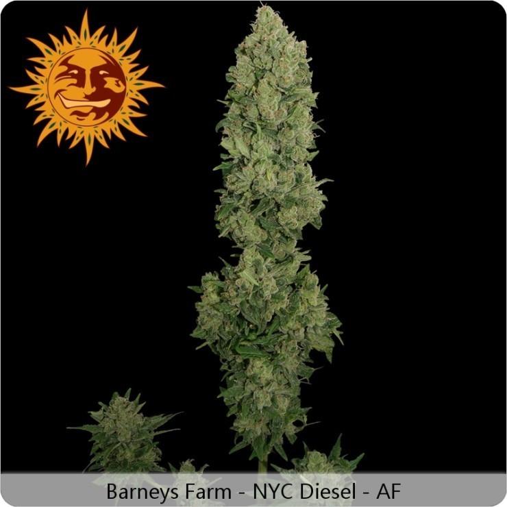 Barney'S Farm - NYC Diesel Auto (auto/fem.)