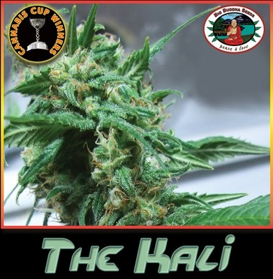 Big Buddha Seeds - The Kali (fem.) SBB3944