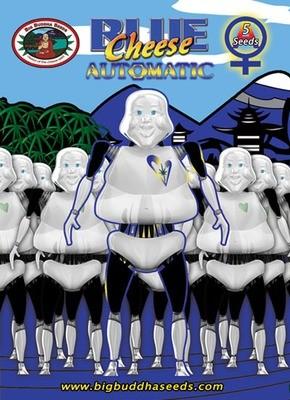 Big Buddha Seeds - Blue Cheese Auto (auto/fem.) 00390