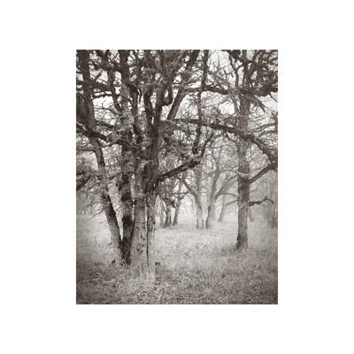 The Grove Photogravure Print