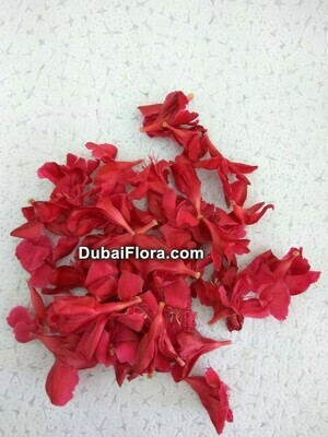 Red Oleander Flower (Arali)